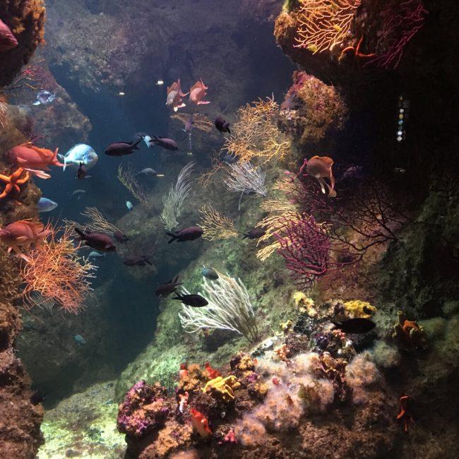 la-rochelle-aquarium2