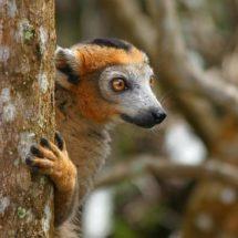 Vijf plekken in Madagaskar die je wilt hebben gezien | simoneskitchen.nl