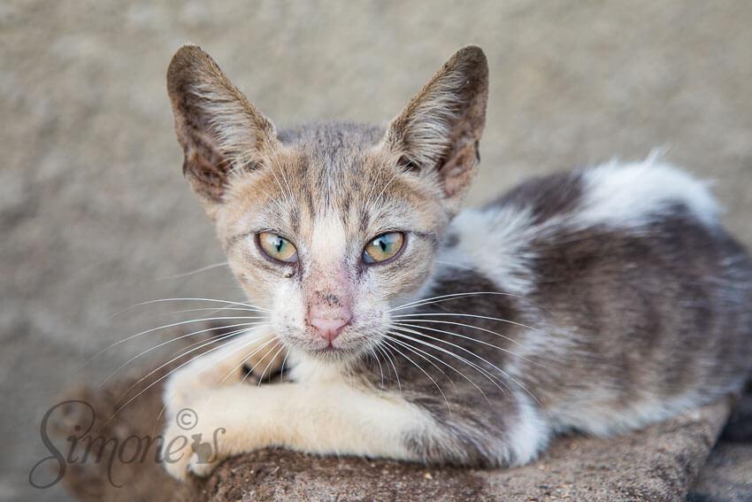 Kat in Senegal