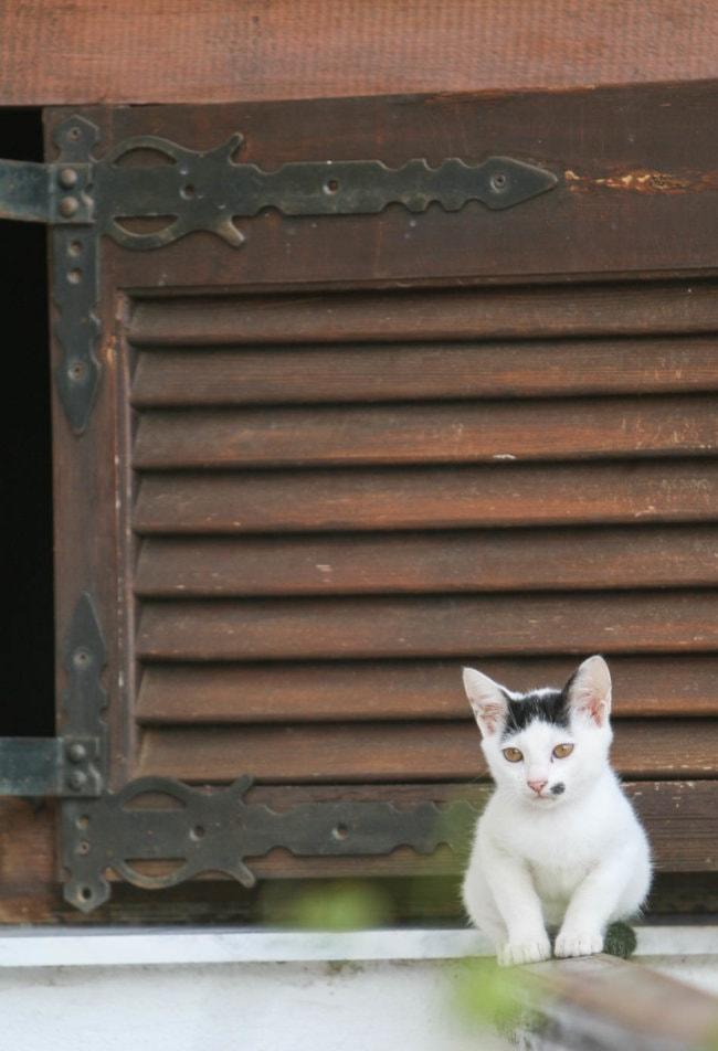 Griekse katten