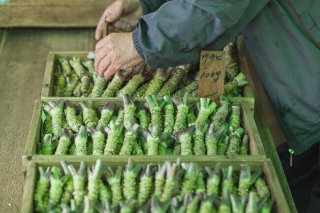 Wasabi wortels