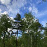 Natuur in Overijssel