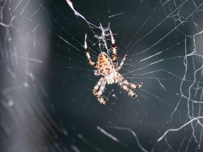 20070826 - Spider -070826 -001