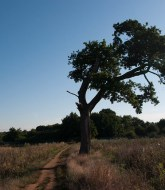 The crooked tree 1