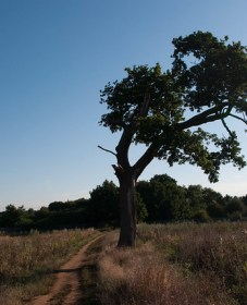 The crooked tree 11