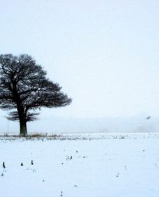 A Tree in winter