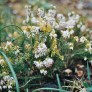 Yashica 230 AF sample picture - Flowers in the garden