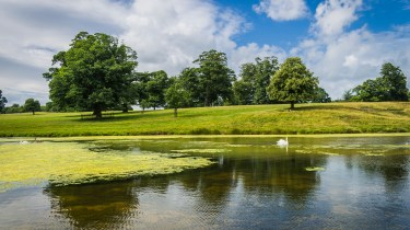 Raby Castle County Durham Pictures - A lone swan on the lake at Raby Castle