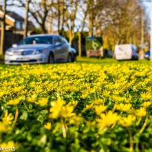 Nex-6 and Pentax smc 50mm f/1.7 prime pictures - Buttercups and cars