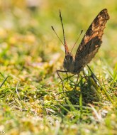 Favourite Picture - Grounded Butterfly 1