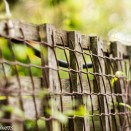 Garden pictures with Takumar standard lenses - A wooden fence