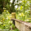Macro pictures without a macro lens - Fence