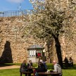 Pictures of Framlingham in Suffolk - People sitting under a tree at Framlingham Castle