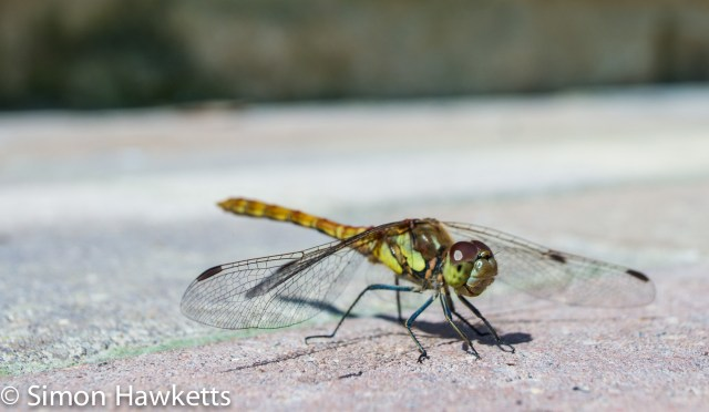 Pictures from Woburn Forest CenterParcs - Dragonfly