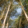 Pictures from Woburn Forest CenterParcs - Trees