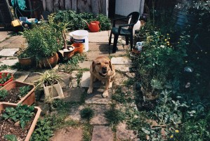 Photos from film found in old cameras - a dog in a back garden