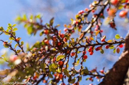 Tamron BBar 28mm f/2.8 sample picture - Close up berries