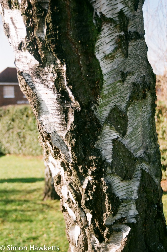 Nikon F80 sample photographs - Tree bark