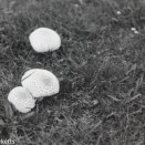 Caffenol C-M and Fomopan 200 sample picture - Toadstools