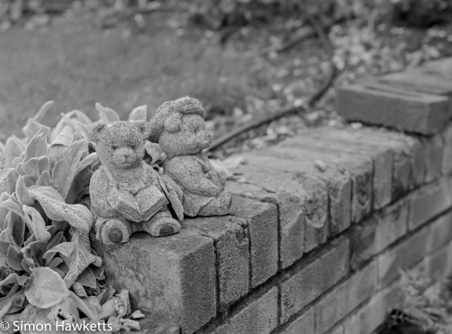 Bronica ETRsi -Mr and Mrs Bear in the garden