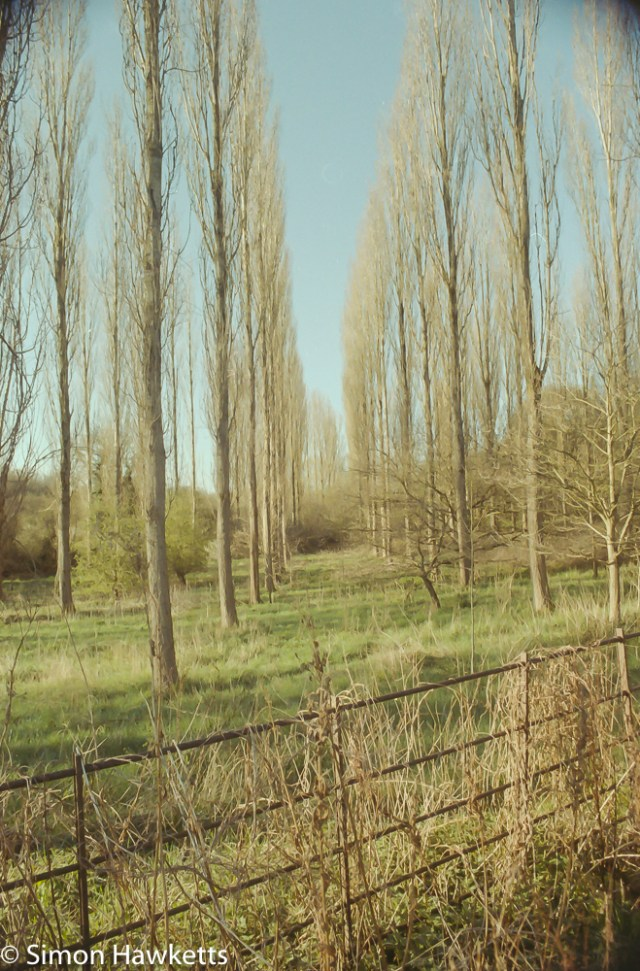 Pentax Z-20 sample pictures - trees and a fence