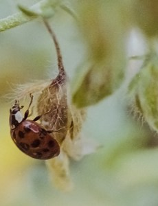 A photo showing a ladybird from a post about macro photography on film