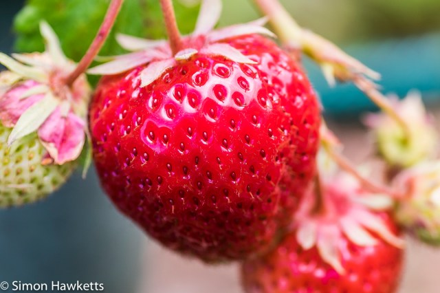 Fuji X-T1 macro sample pictures - strawberry