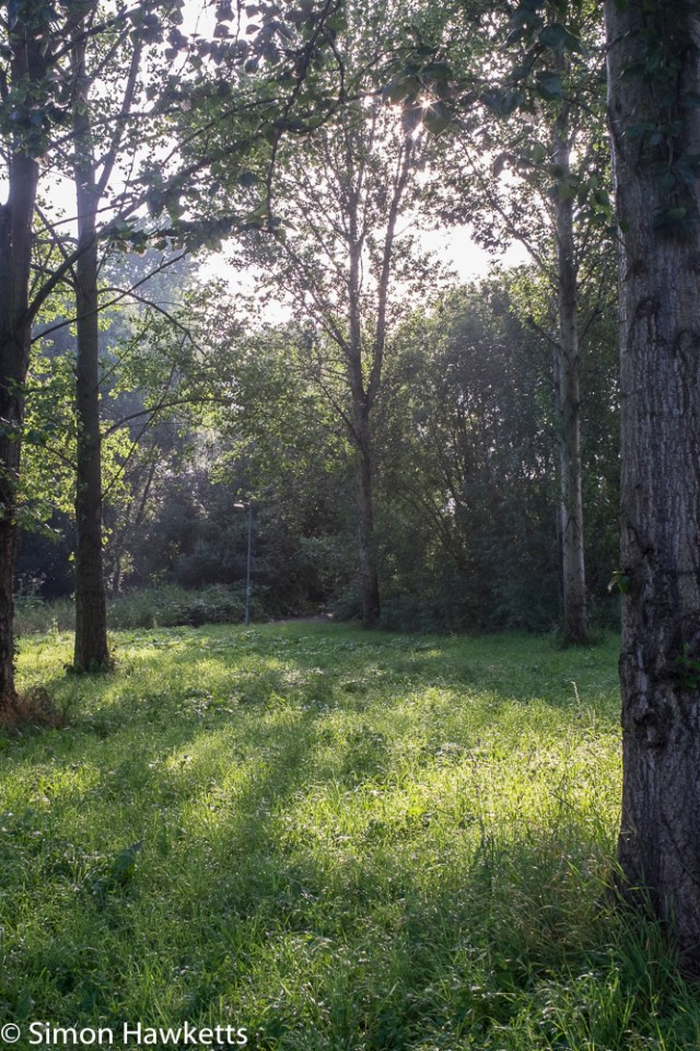Sigma Mini-Wide on Fuji X-T1 sample pictures - trees and grass