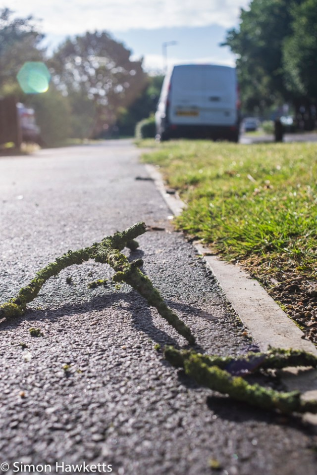 Sigma Mini-Wide on Fuji X-T1 sample pictures - twig on the pavement