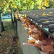 Agfa precisa CT100 and Minolta Dynax 5 - autumn leaves in a gutter
