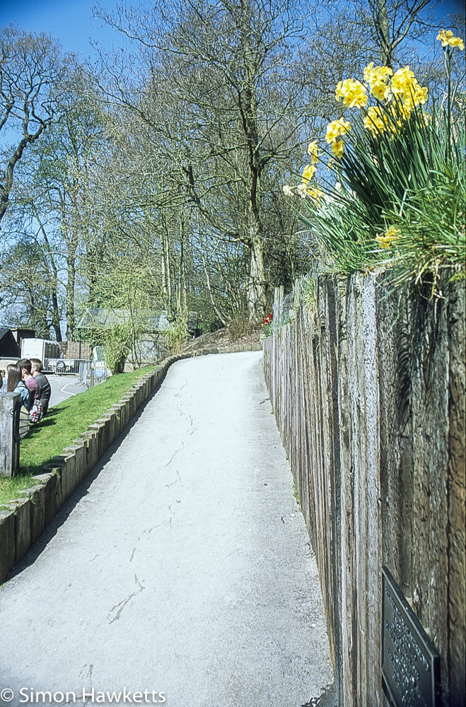 Pentax Z-1P & Agfa CT-100 slide film - Chatsworth house path to play area