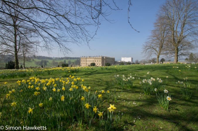 Chatsworth house pictures - the house behind daffodils