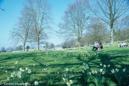 Chatsworth house pictures - Daffodil view