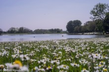Kodak Retina Ysarex lens on Fuji X-T1 mirrorless - Lake and daisies