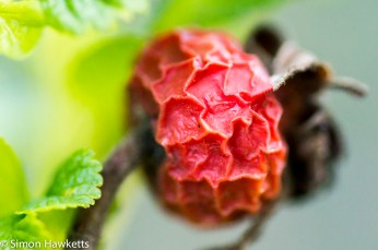 Sony Nex 6 with Tamron 90mm macro lens - Last year's fruit