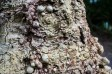 Beningborough Hall pictures - Tree Bark