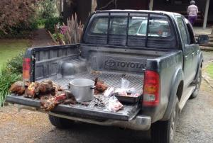 Processing the final birds of the season. The back of a ute makes an ideal butchers block.