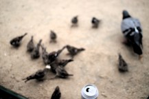 we don't feed the pigeons