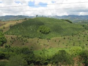 Cofee Plantation