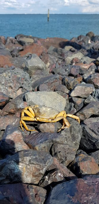 Being a crab