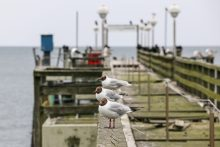 Gulls watching