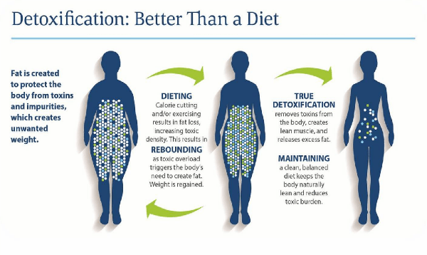 Natural Detoxification   Tampa   St. Petersburg   Simon Wellness Consulting