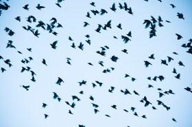 life bird