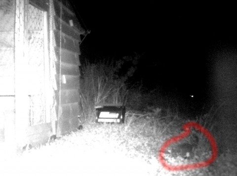 Stoat in lower RHS. Some people find it hard to see him so I've highlighted it in red
