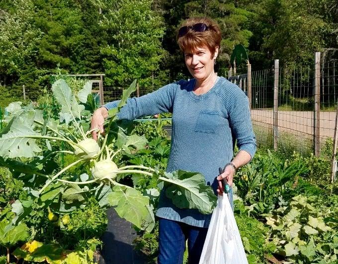 Martha McKinnon picking kohlrabi from the community garden in Land O' Lakes, Wisconsin.