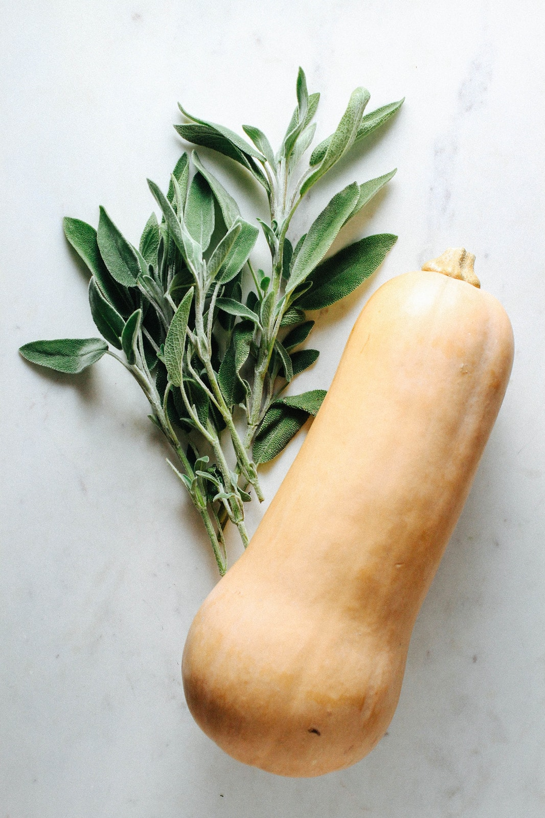 top down view of fresh sage and whole butternut squash.