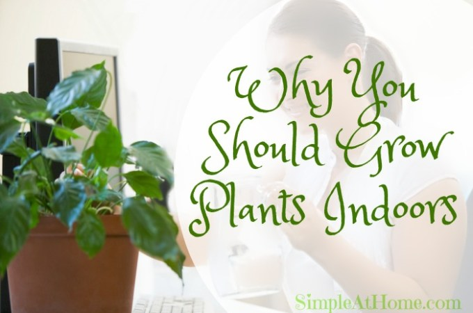 Why You Should Grow Plants Indoors
