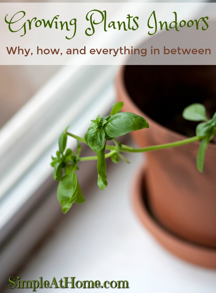 Did you know this? Growing plants indoors is easy and beneficial.