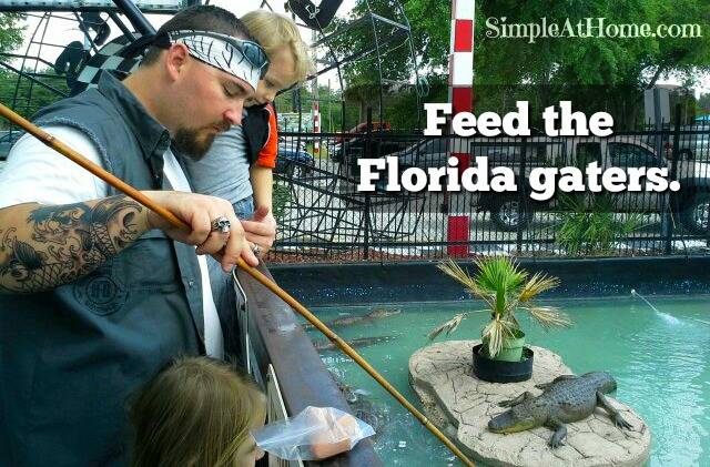 Looking for a fun and inexpensive field trip? How about feeding alligators? Yes that's safe if done in the right place.