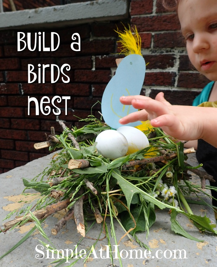 this bird's nest is great science